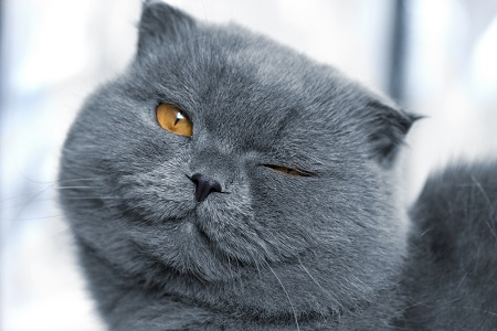 Hukum Memandulkan Kucing Peliharaan