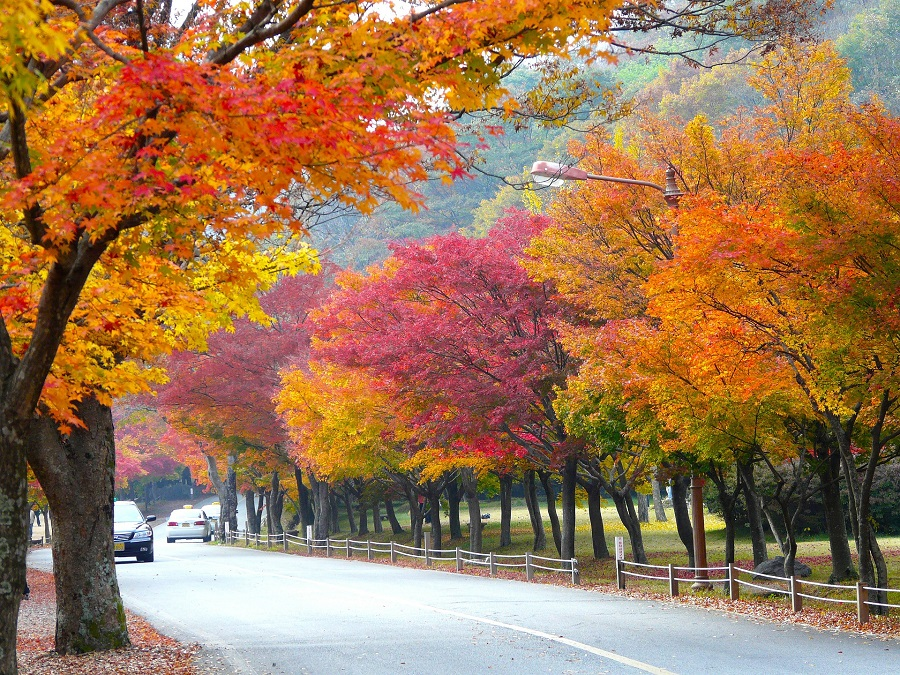 8 Tips Percutian Muslim ke Korea