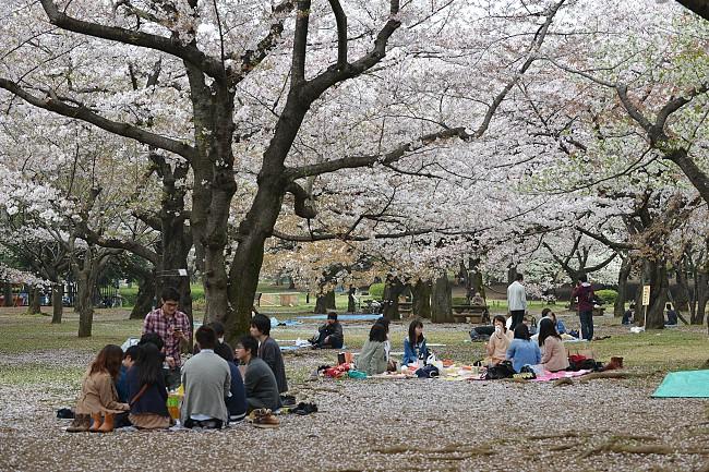 11 Perkara PERCUMA Yang Anda Boleh Lakukan Di Tokyo