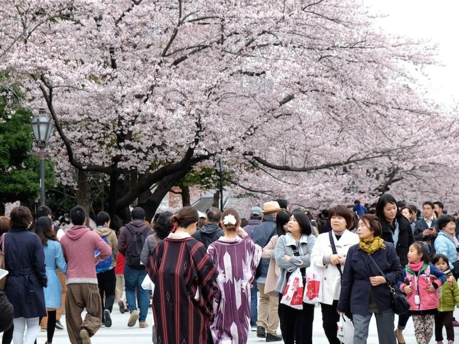 Cherry Blossom Jepun 2019: Masa Terbaik Dan Tempat Untuk Lihat Sakura