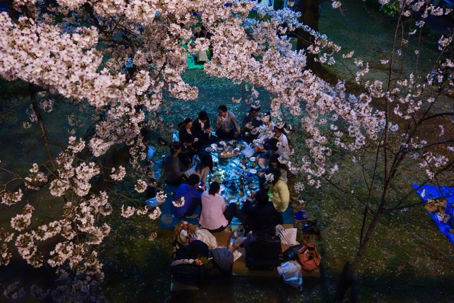 Cherry Blossom Jepun 2019 Masa Terbaik Dan Tempat Untuk Lihat Sakura