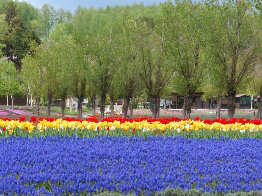 8 Sebab Mengapa Anda Perlu Ke Hokkaido(Mesra-Muslim)
