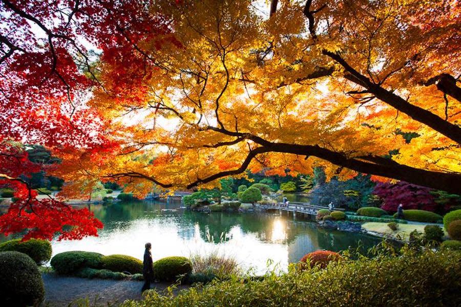 Musim Luruh Di Jepun: 7 Tips Awesome (Dan Mesra Muslim!) Untuk Percutian Terbaik Anda