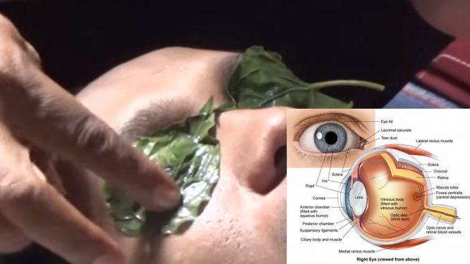 2 Helai Daun Sirih Mampu Mengembalikan Pandangan Mata Yang Rabun Kembali Normal.
