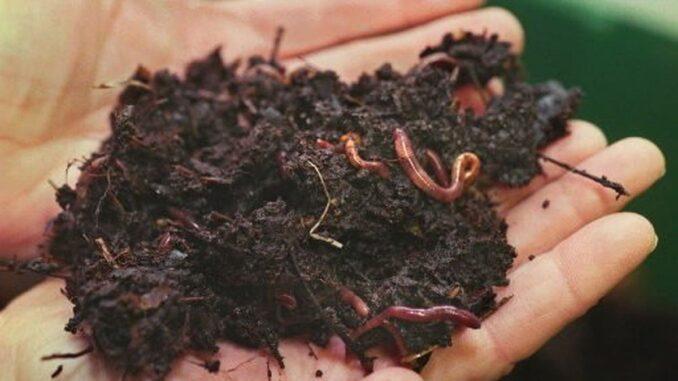 Apa Itu Baja Vermikompos (Baja Organik Sisa Cacing) & Kegunaannya